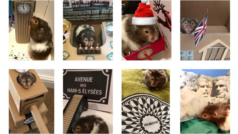 Collage of images showing Spud the hamster on various adventures
