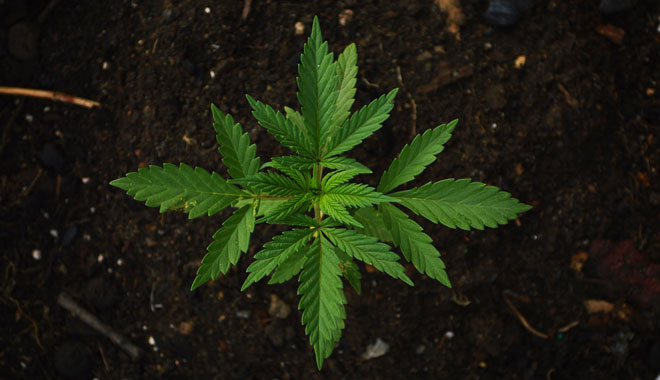 Sativex cost-effective in final NICE guideline on cannabis-based medicines